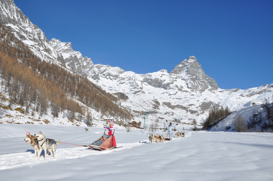 dogs husky sled cervinia
