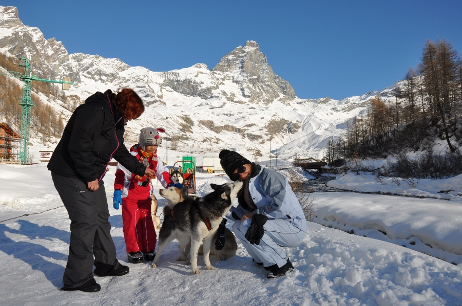 sled dog tour in aosta valley italy cervinia