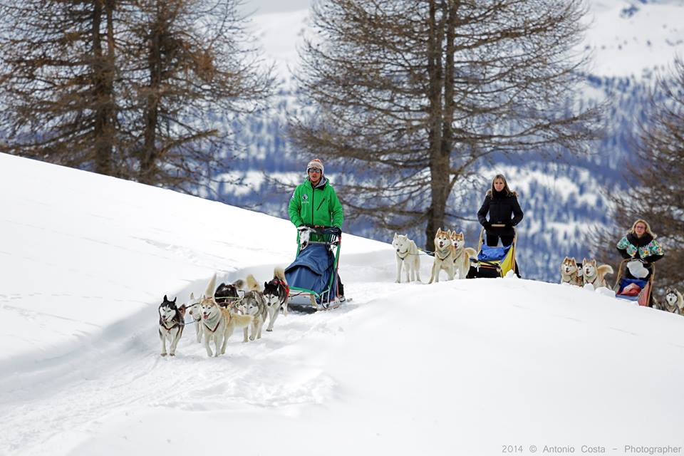 sled dog in Cervinia